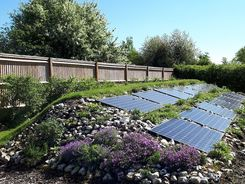 Garden design in Denham, Buckinghamshire with solar array planted with Alpine plants.